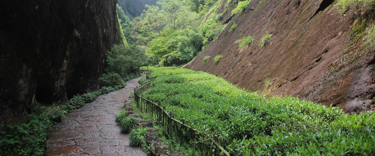 китайские чайные плантации